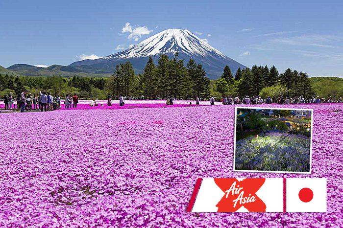 เที่ยวญี่ปุ่น Dazzling Flowers in Tokyo (Pinkmoss,Wisteria) (เม.ย.61)