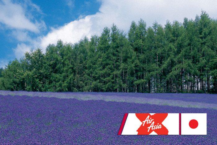 ทัวร์ญี่ปุ่น Hokkaido Lavender Phenix (มิ.ย.-ก.ย.61)