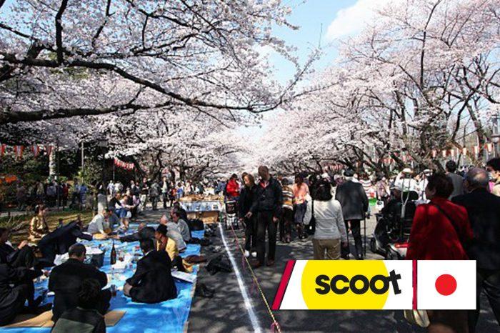 ทัวร์ญี่ปุ่นสงกรานต์ Tokyo Sakura Blossom (เที่ยวเต็มไม่มีอิสระ)(เม.ย.61)