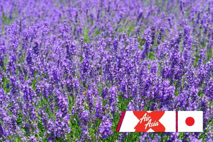 ทัวร์ญี่ปุ่น All Star Lavender 4D3N (มิ.ย.-ก.ย.61)