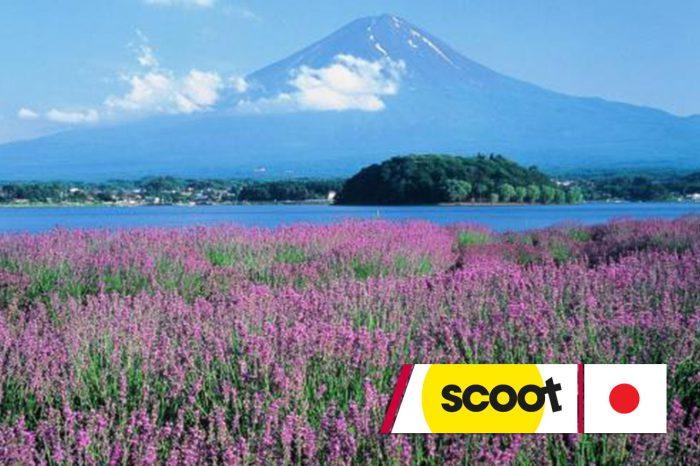 ทัวร์ญี่ปุ่น Tokyo Popular Lavender (มิ.ย.-ก.ย.61)