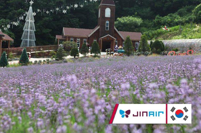 ทัวร์เกาหลี Seoul Hot Lavender Healing Festival (มิ.ย.-ก.ย.61)