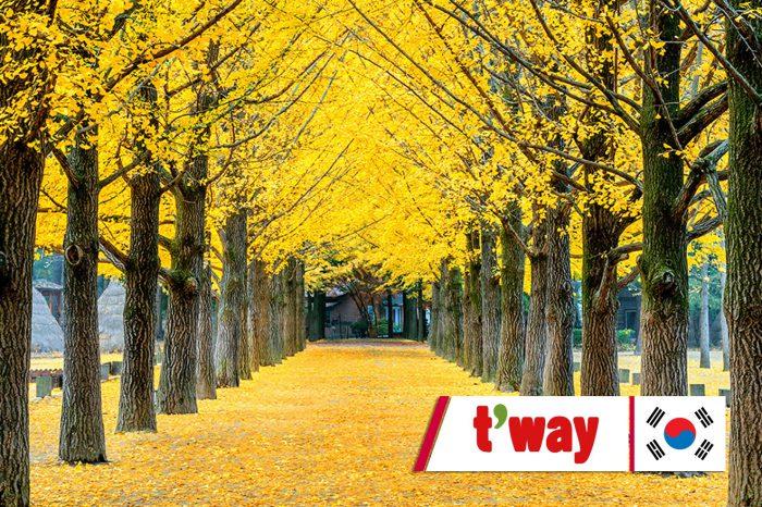 ทัวร์เกาหลี Funny Seoraksan in Autumn (ก.ย.-พ.ย.61)