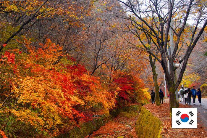 ทัวร์เกาหลี Korea Plus + Joy Autumn (ก.ย.-พ.ย. 61)
